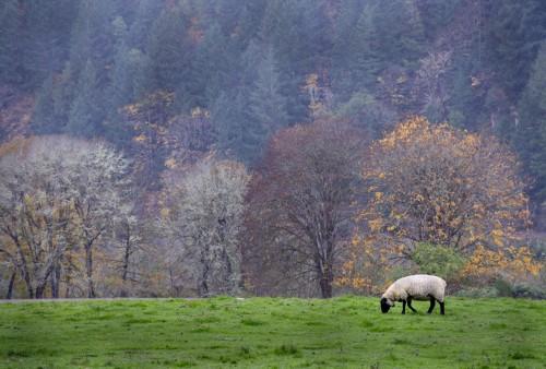 lost-sheep-parable