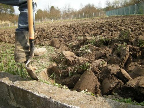 dig-a-garden-treasure
